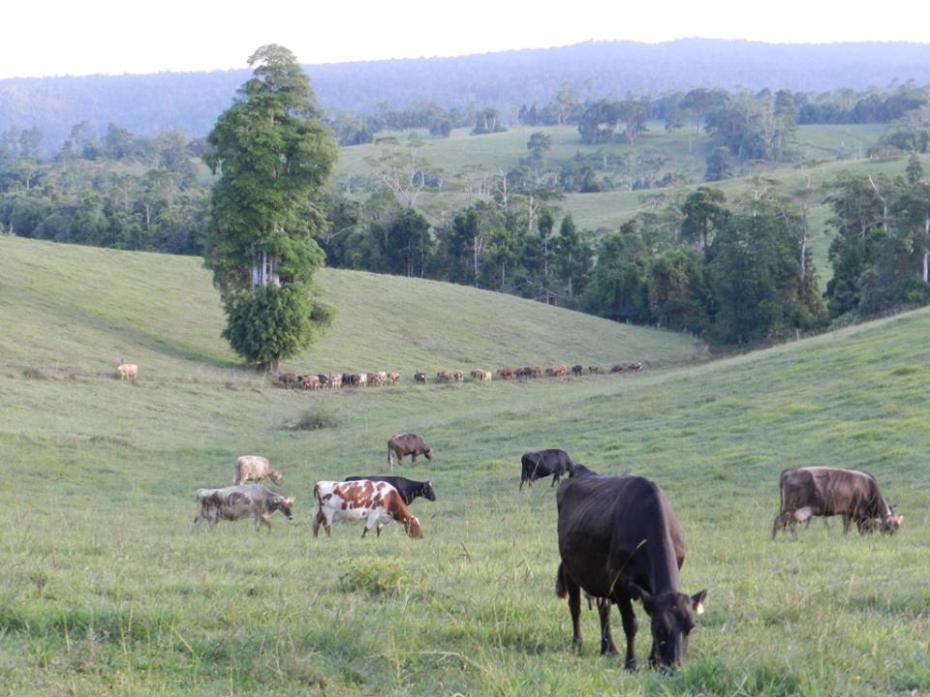 Mungalli Creek Dairy Farm